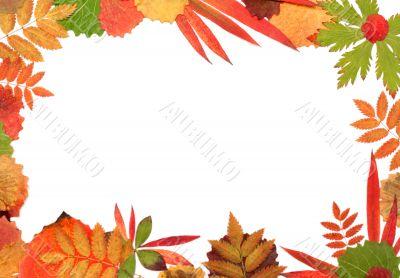 Frame their autumn sheet