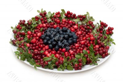 Cowberry and whortleberry on plate