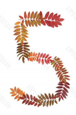 Numeral five 5 put from autumn sheet