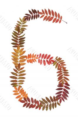 Numeral six 6 put from autumn sheet