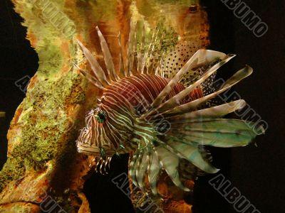 Fish Swimming ~ Watercolor Effect
