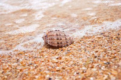 Beautiful sea shell lying on the sand