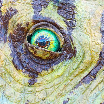 Triceratops dinosaur eye