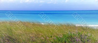 Tropical sea and green grass