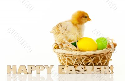 Basket with the Easter eggs and small chicken