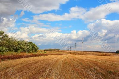 Summer landscape with field and sky