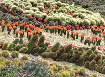 different cactuses in open space
