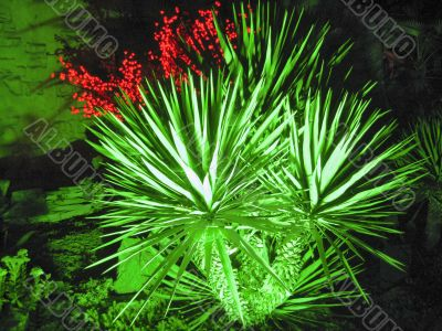 Palm tree growing in the summer park. Tropical nature
