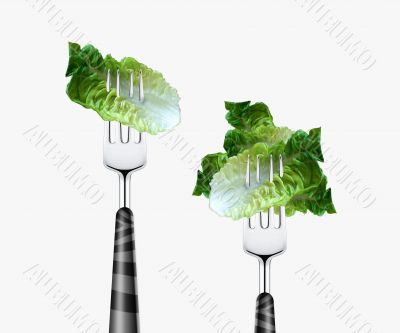 Lettuce pierced by fork,  isolated on white background