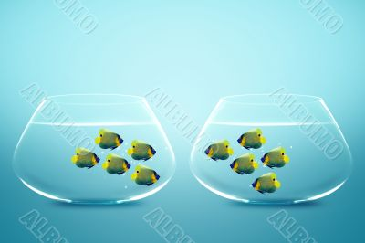 Two groups of angelfish in fishbowls