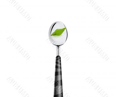 green leaf and spoon