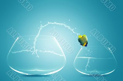 Anglefish jumping to small bowl