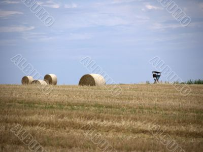 Straw bales and high seat