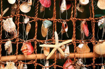 panel of the shells of marine molluscs