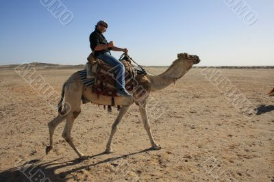 with the camel in the desert