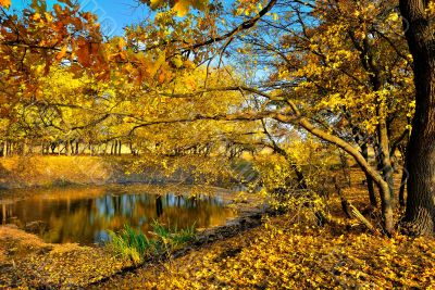 A small lake in the autumn forest