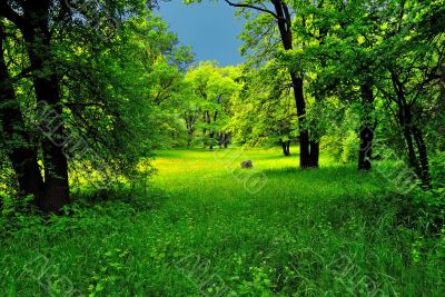 Green forest before the storm