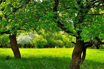 Under the two trees on the green sunny meadow