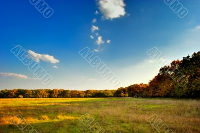 The yellow-green field near the autumnal forest