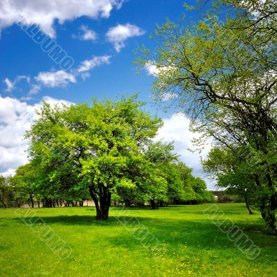 Single tree on the green spring meadow