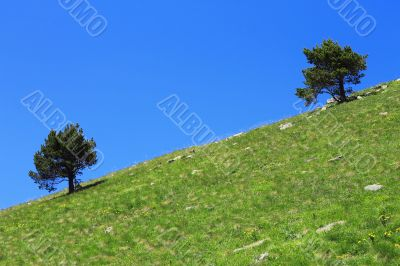 Pair lonely trees growing on the slope of the mountain