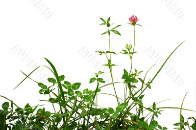 plants isolated over white