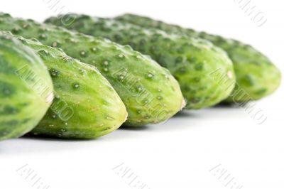 five ripe cucumber closeup