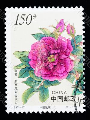 CHINA - CIRCA 1997: A Stamp printed in China shows Chinese rose flowers, circa 1997