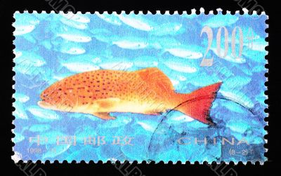 CHINA - CIRCA 1998: A Stamp printed in China shows coral reef fish , circa 1998
