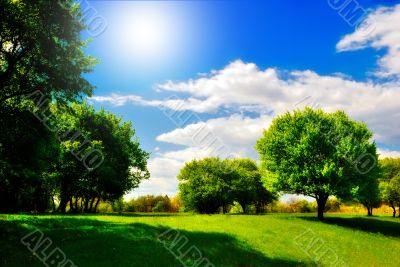 green meadow under the shade trees