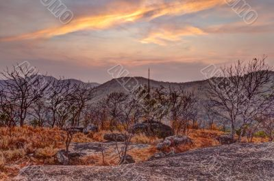 Dried flora in mountains at sunset