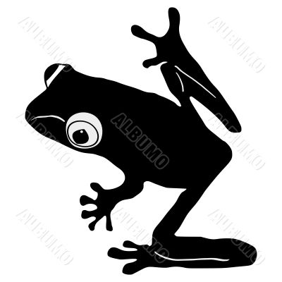 silhouette of tree frog