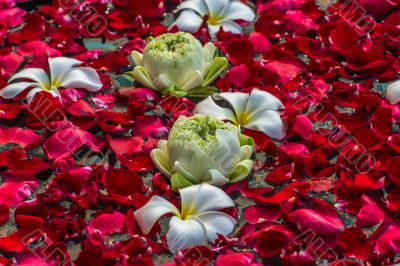Rose petals, lotos and plumeria flowers in a water