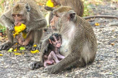 Mother monkey and her little baby