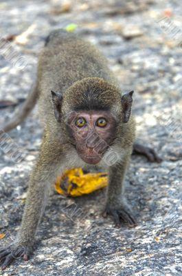 The monkey in mountain