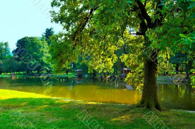 Shade tree by pond in park