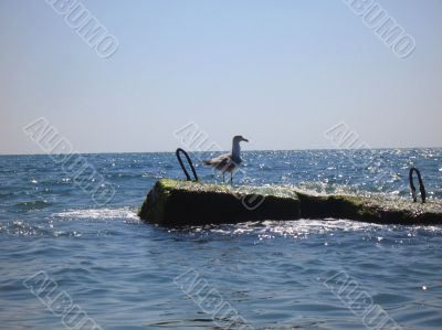 Seagull staying near a seashore. Summertime nature