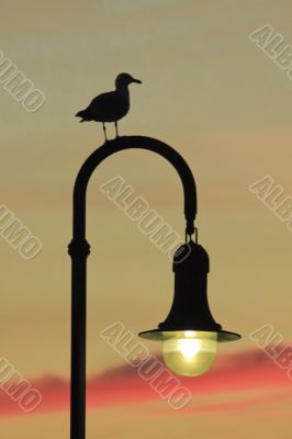 Seagull watching the Sunset