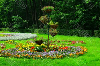 plants in the flower bed in the garden background