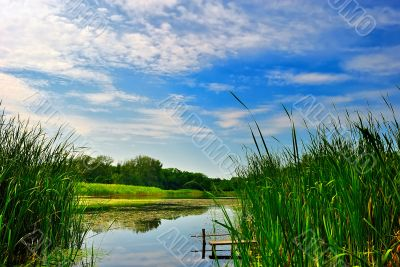 Lake with reeds under blue cloudy sky