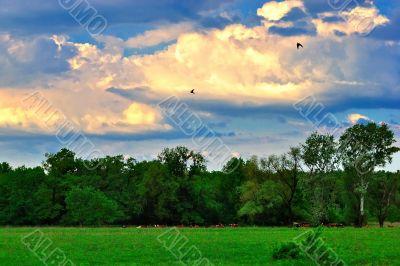 Summer evening on a green meadow