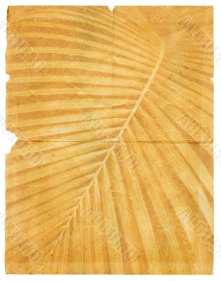 old crumpled paper with page torn textured palm leaf