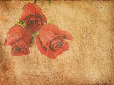 Grunge paper with red roses