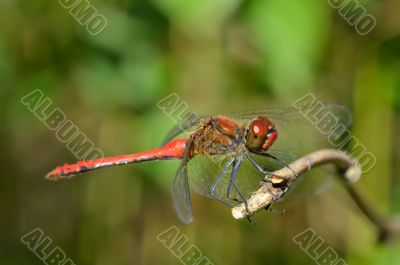 Bright dragonfly sitting on a branch