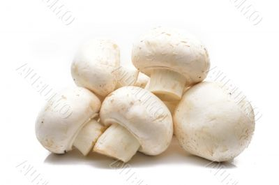 Fresh field mushrooms on a white background