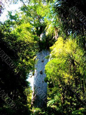 Tree and Greenery