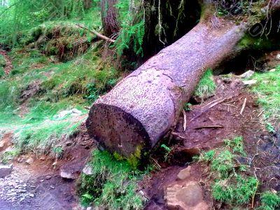 Pennies In Log
