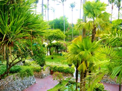 Peaceful Asian Garden