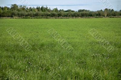 Farmer`s Field