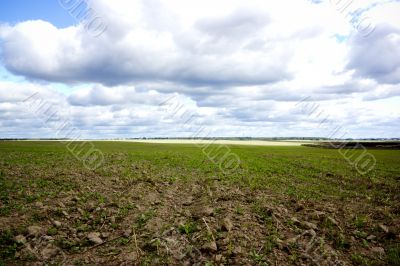 field with horizon